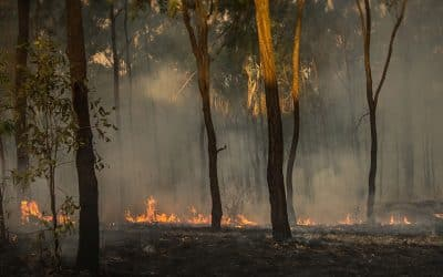 Can a worker shoot through to fight bushfires?